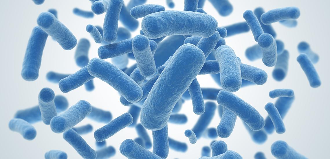 La importancia de los probióticos